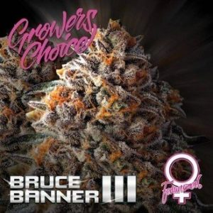 BRUCE BANNER III (GROWERS CHOICE) FEMINIZED